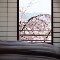 お部屋の窓からは垂れ桜が(和洋特別室)