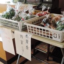 *無農薬の新鮮なお野菜、販売しています!