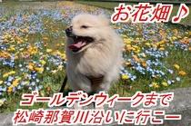 お花畑バニラ新