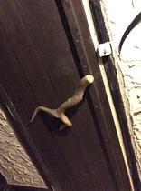 沖縄木材と流木の取っ手が付いたハンドメイドの温かみのあるドアです