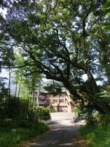飛鳥神社の森を抜けると、尾鷲シーサイドビュー