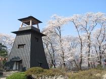 沼田公園【鐘桜】