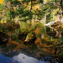 明神池二之池秋景