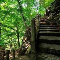 ◆渓谷へと続く階段