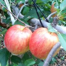 ◆美味しい果物が豊富な信州高山村