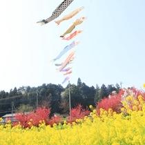 ☆周辺・景色_こいのぼり (4)
