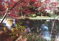 奥庭から見える池
