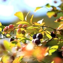 秋の装いを