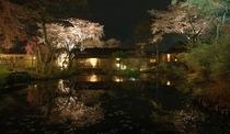 夜景 桜 外観