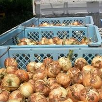 野菜も無農薬のものを使用しております!