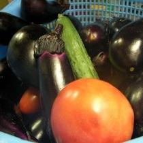 獲れたて新鮮!自家製無農薬の安心野菜♪