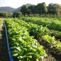 自家製の無農薬野菜を使用しております