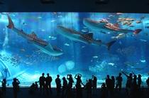 美ら海水族館はサボテンスマイルから車で25分。