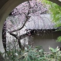 【季節の庭花】梅