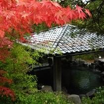 露天風呂(秋)…秋は四季の中でも一番人気!紅葉を見ながら露天風呂をお楽しみください