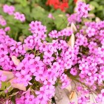 *館内周辺のお花