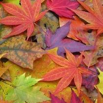 色とりどりの美しい紅葉