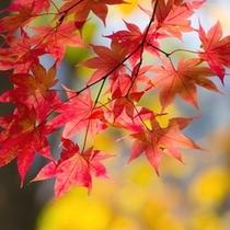 紅葉の良い時期は例年10月2週目位です。