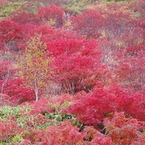 白根火山付近の紅葉