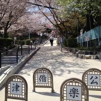 桜の名所「津 偕楽公園」 近鉄津駅西口より徒歩5分