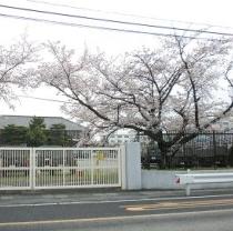自衛隊の桜並木