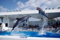 雨の日でも楽しめる!九十九島水族館【海きらら】