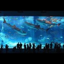 ◆美ら海水族館-黒潮の海◆