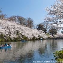 【観桜会】内堀にて、ボートからも桜をお楽しみいただけます