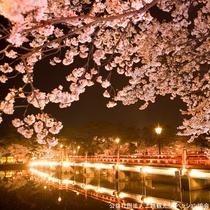 【観桜会】上野の恩賜公園、弘前城公園とともに日本三大夜桜の一つに数えられています。