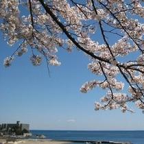 【春】海と桜