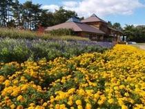 小岩井農場まきば園 花壇風景
