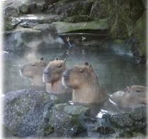 しゃぼてん公園 かぴばら入浴