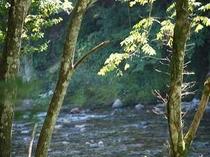 16. ここから見る利根川は底まで透きとおる美しさが自慢