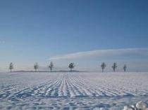 白銀のメルヘンの丘