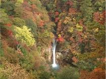 那須平成の森 駒止の滝 紅葉
