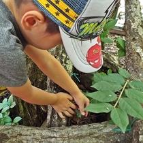 『カブトムシ捕り体験』でお気に入りのカブトムシを見つけよう♪