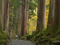 戸隠、奥社の杉並木3