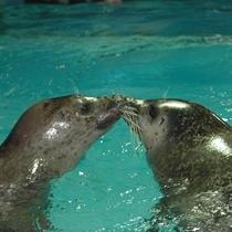 【下田海中水族館】kissするアザラシ