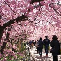 河津桜のトンネル
