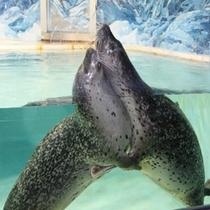 【下田海中水族館】かわいい動物がいっぱい♪