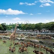 【アニマルキングダム】間近で動物に会えます♪