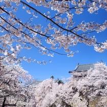 ■満開の桜
