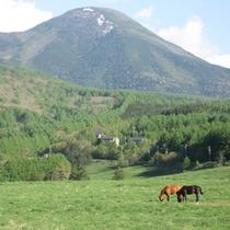 ■蓼科山と馬