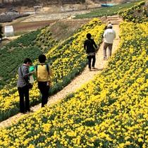 ■花が満開の信州の春