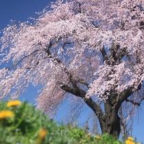 ■お花見の季節