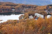 女神湖カラマツの黄葉