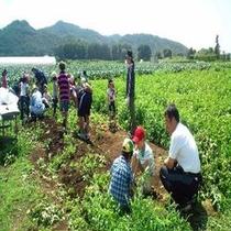 ジャガイモ収穫体験(茅野市)