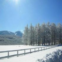 冬の蓼科第二牧場
