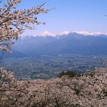 【桜と常念岳】