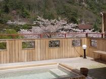 桜と展望露天風呂